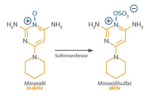 Minoxidil in der Pharmakologie